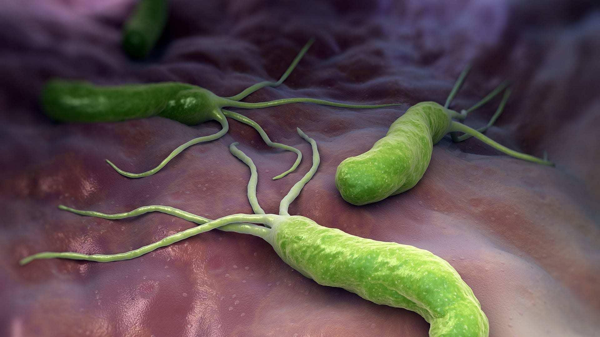 бактерия гастрита